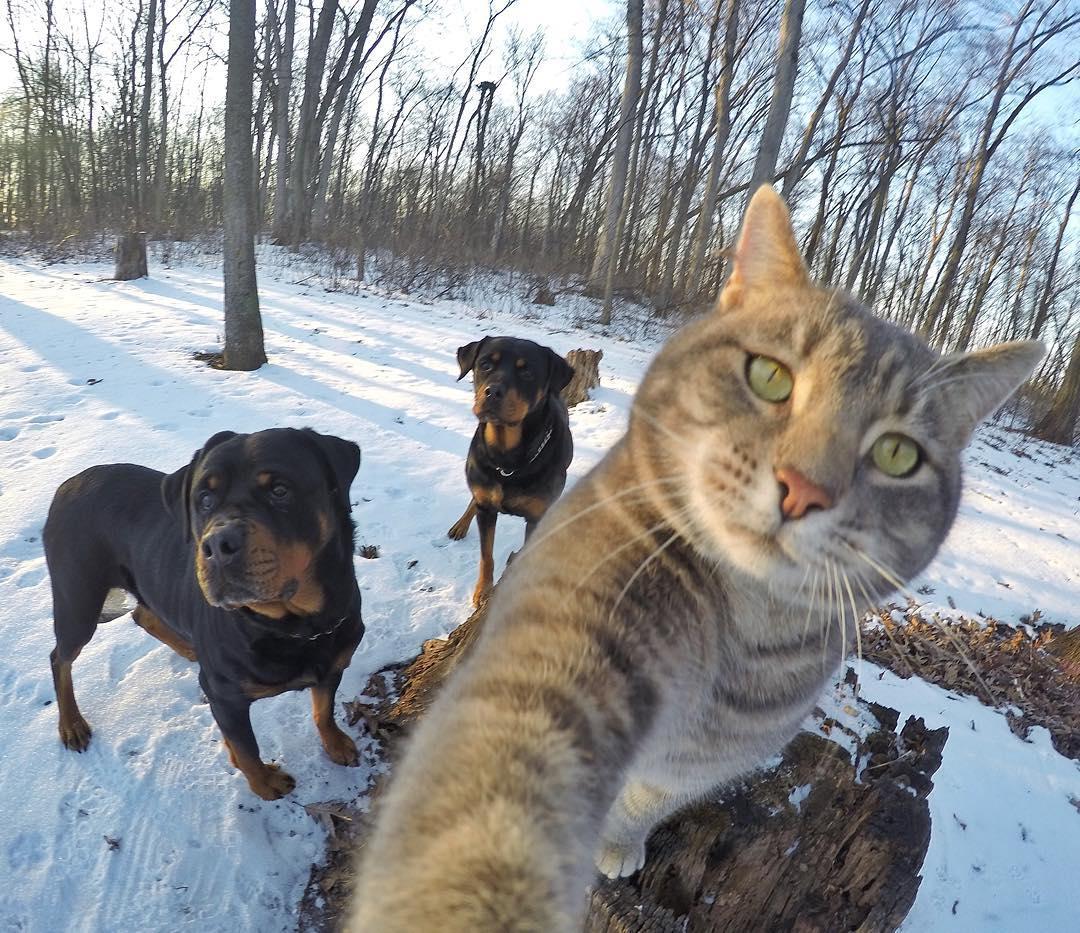 Conoce A Manny El Gato Que Toma Selfies Mejor Que T 250