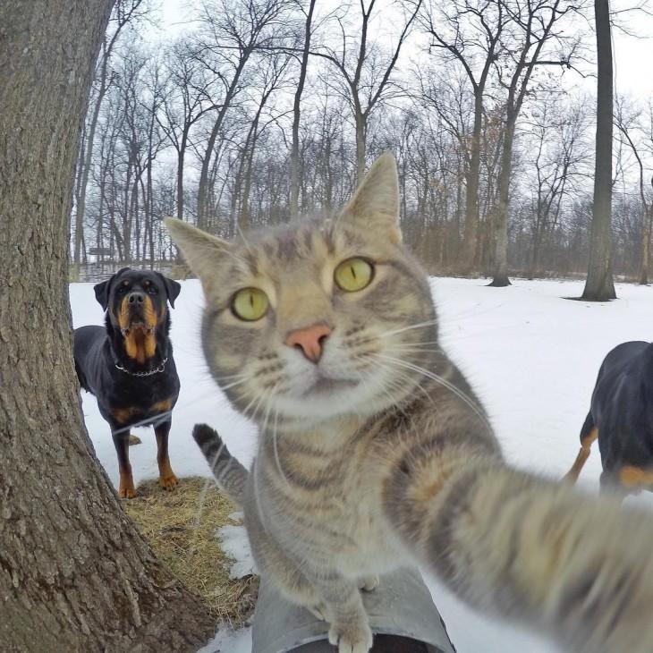 gato con una foto desde el buzón