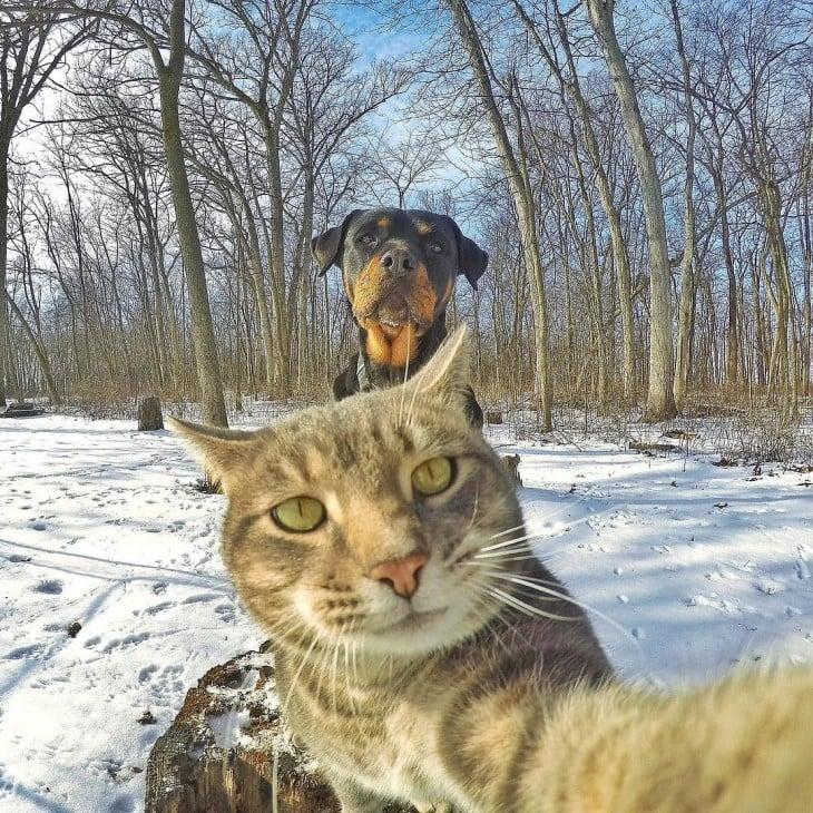 con su amigo el rott al fondo