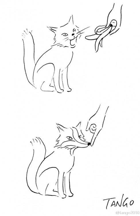dibujo de un gato que con una cáscara de plátano se parece a un zorro
