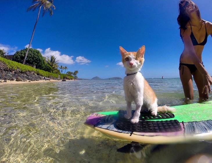 chica con un gato tuerto sobre una tabla de Surf
