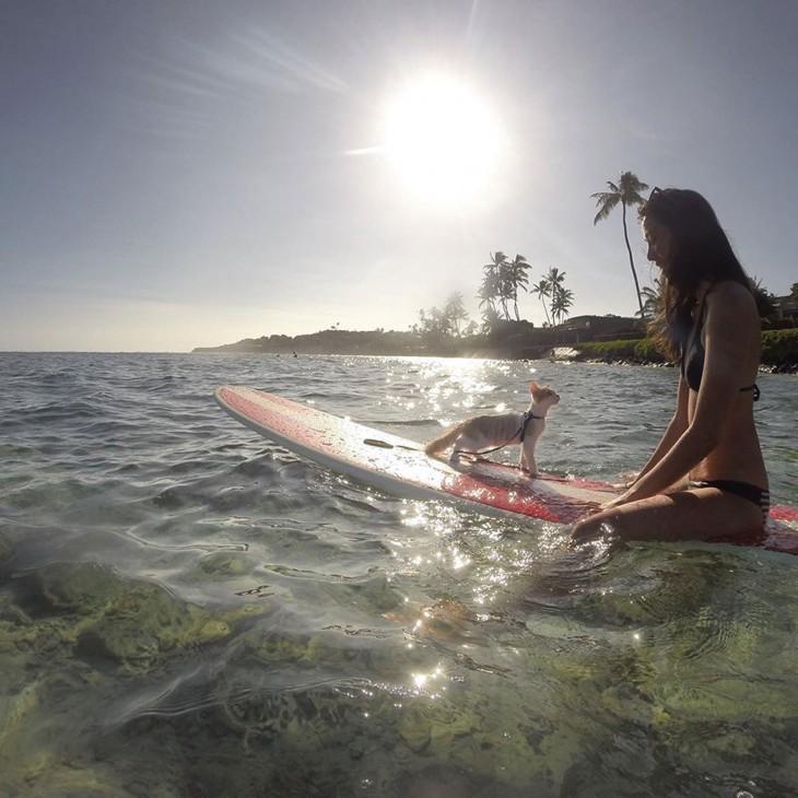 Chica con un gato sobre una tabla de surf en las costas de Honolulu, Hawái