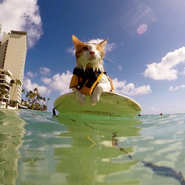 Kuli, el gato tuerto en Honolulu, Hawái que ama surfear
