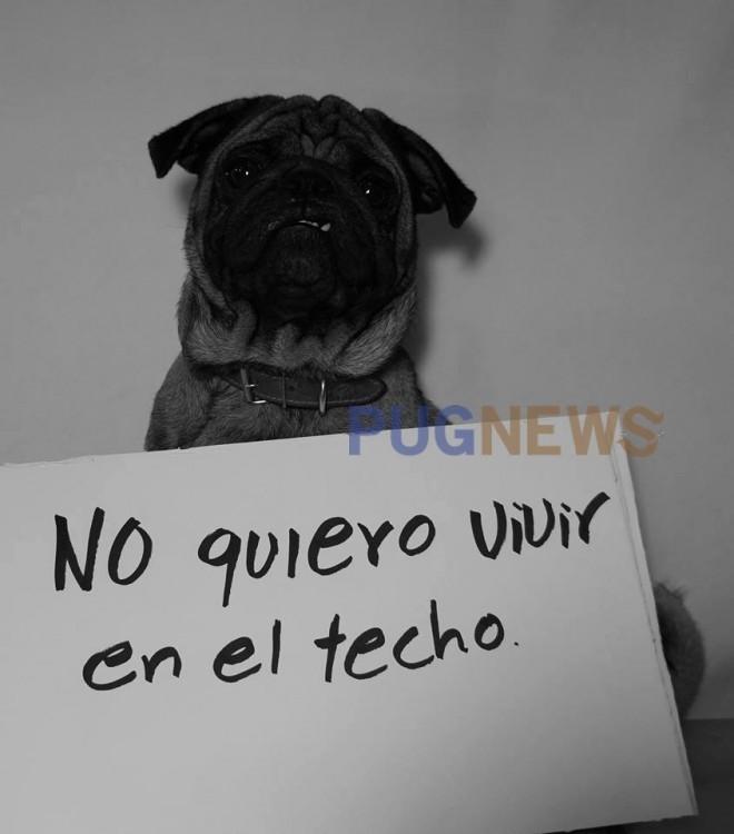NO QUIERO VIVIR EN EL TECHO