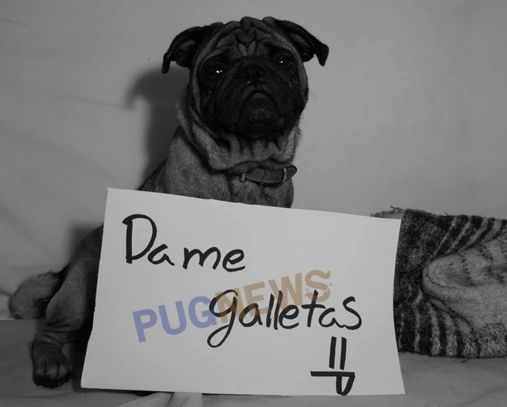 DAME GALLETAS