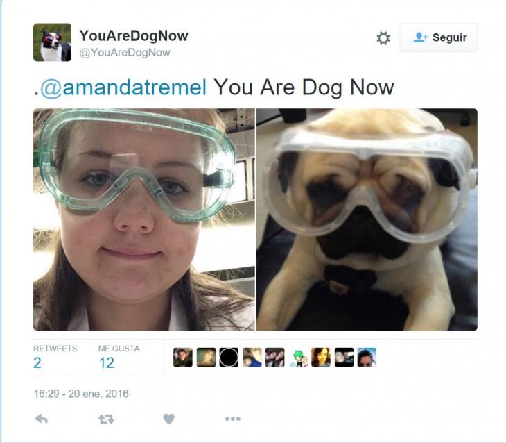 perro con googles