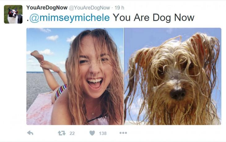 perro en la playa como su dueña toda remojada