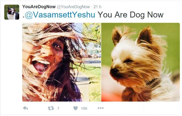 perro con el pelo seco o con el aire de la secadora