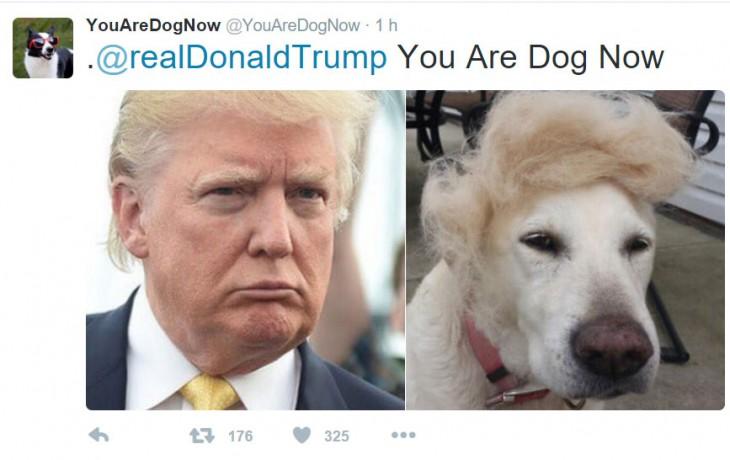 perro con bisoñe de donald trump