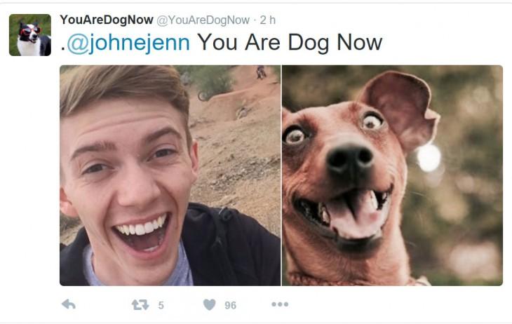 perros que se parecen a sus dueños y otros cuantos