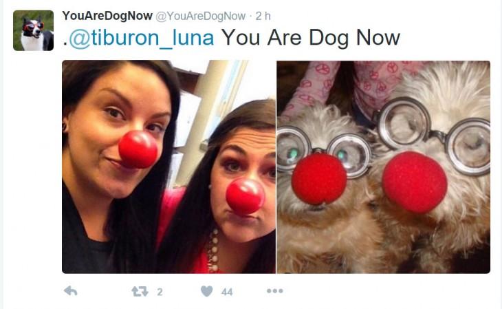 perro con las narices rojas