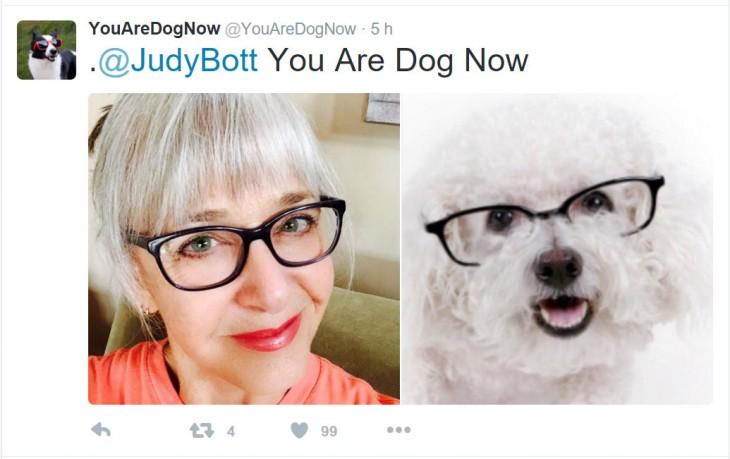 perros con las lentes de la dueña