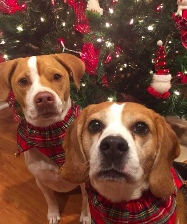 fotografía de dos perros frente a un árbol de navidad