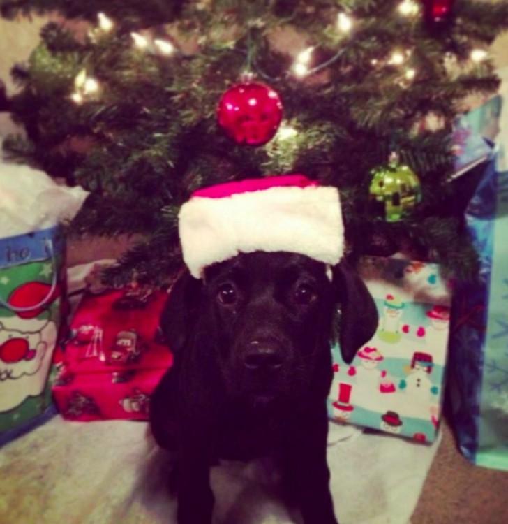 Perro con un gorro de Santa Claus frente a un árbol de navidad