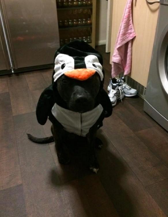 perro vestido de pingüino