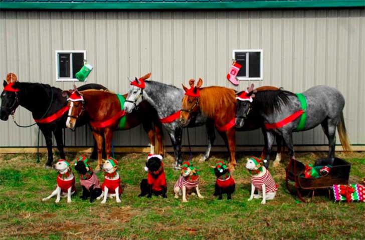 Fotografía de caballos y perros con atuendos navideños en un campo