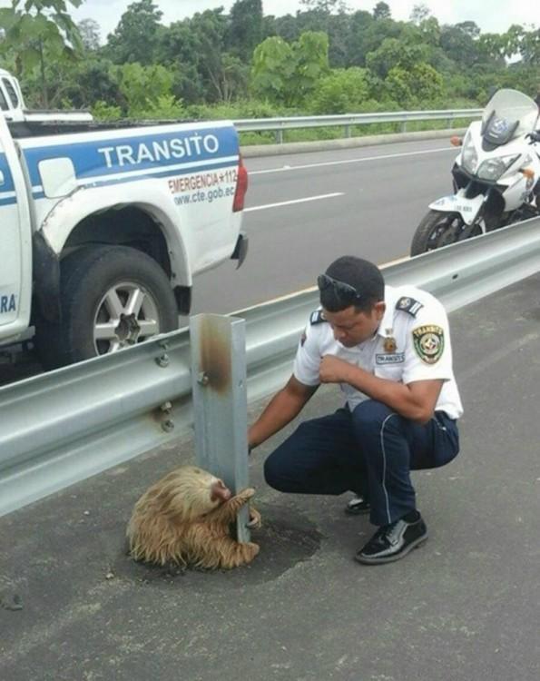 Policía intentando rescatar un oso perezoso en Ecuador