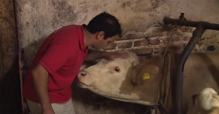 hombre acariciando la cabeza de Brandit un toro que es liberado