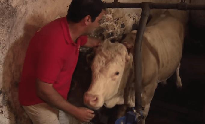 hombre sacando a un toro de una jaula