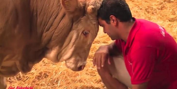 hombre con su cabeza sobre la de un toro