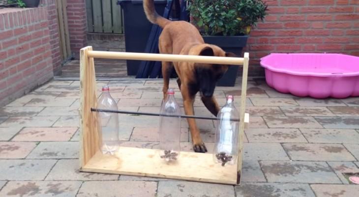 perro jugando con un 3 botellas de plástico sobre una base de madera