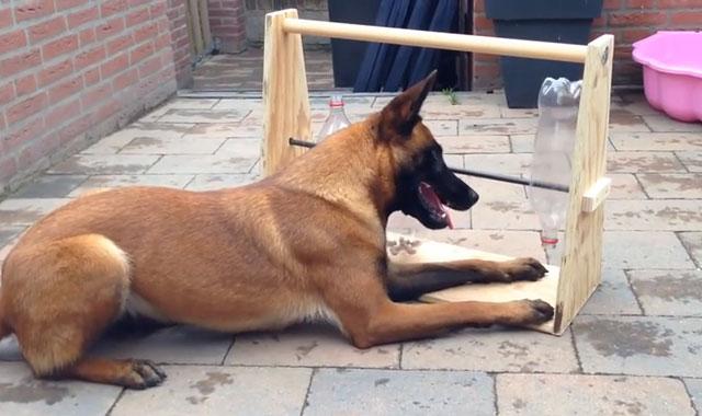 perro acostado en el suelo jugando en un juguete de 3 botellas de plástico con croquetas