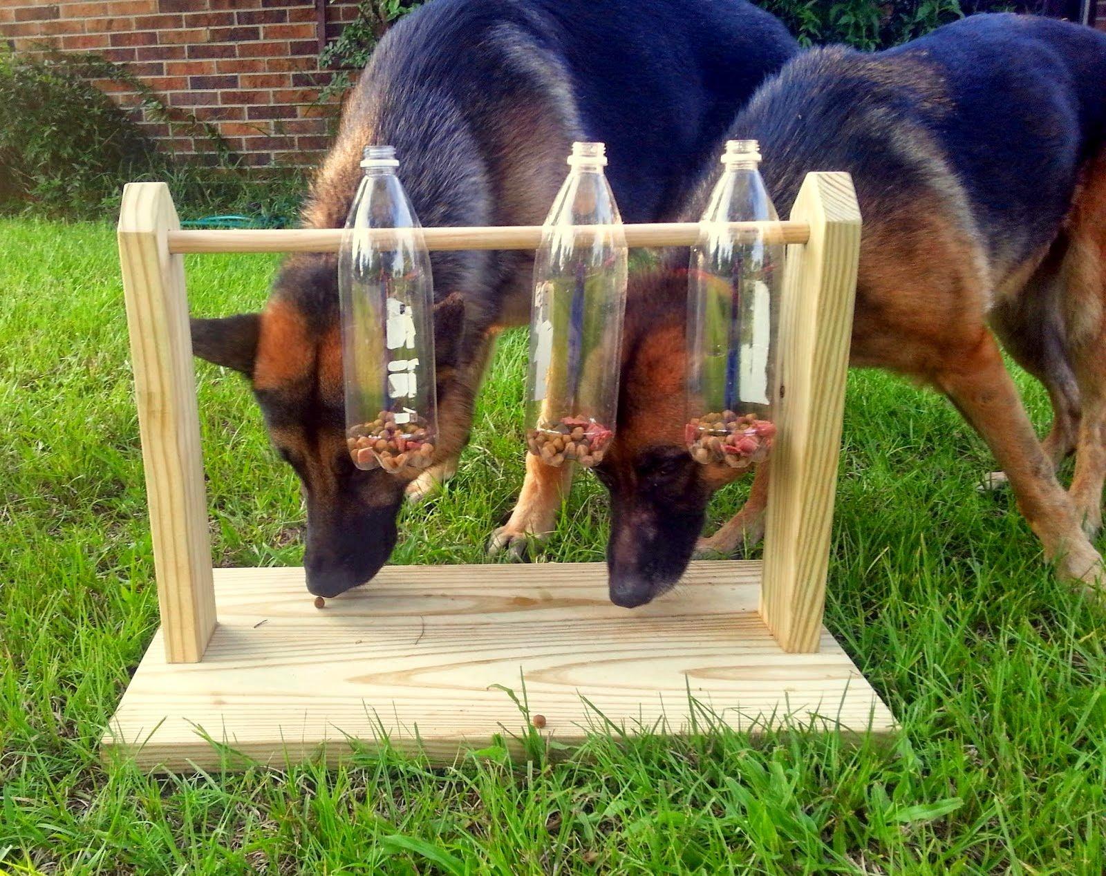 Construye este juguete y entrena la mente de tu perro for Ideas para construir una casa