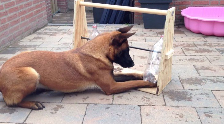 perro sentado sobre el suelo jugando con botellas de plástico en una base de madera