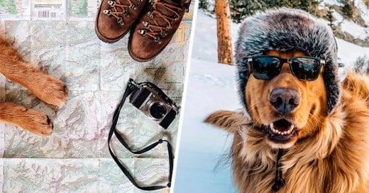Aspen es un Golden Retriever el cual viaja con su dueño y tiene su cuenta en instagram