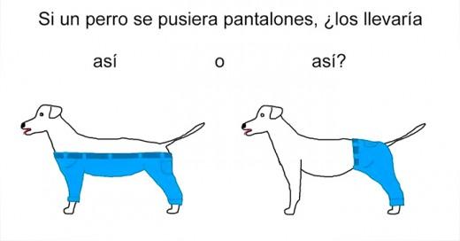 como llevaría pantalones un perro