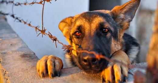 Nuevas y mas severas leyes para la protección de animales en Estados Unidos