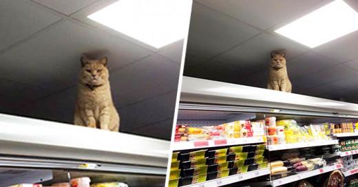 misterioso gatito aparece con regularidad en los estantes del supermercado Brockley Sainsbury en Londres, Inglaterra