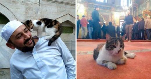 Este sacerdote musulmán alberga gatos que nunca han tenido hogar en una Mezquita