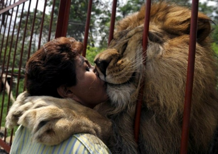 Lepon dando beso a visitante del zoologico