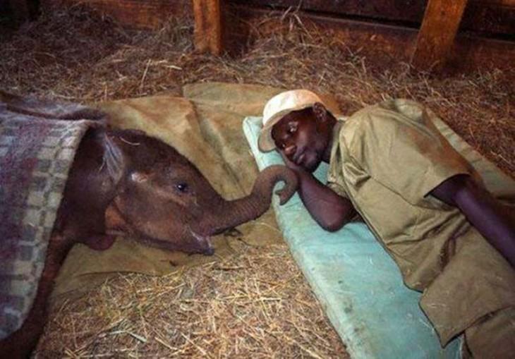 Elefante bebé y su cuidador recostados