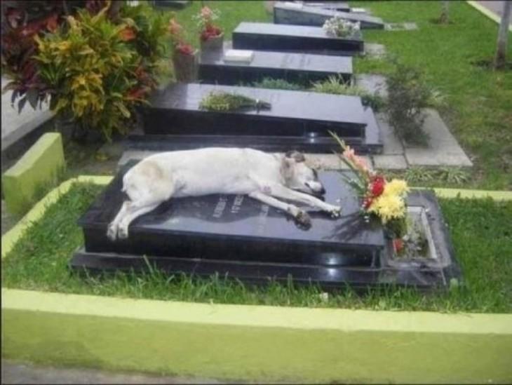 La fidelidad de tus mascotas