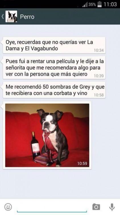 PERRO LAS 50 SOMBRAS DE GRAY