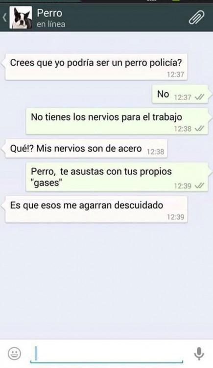 PERRO GASES