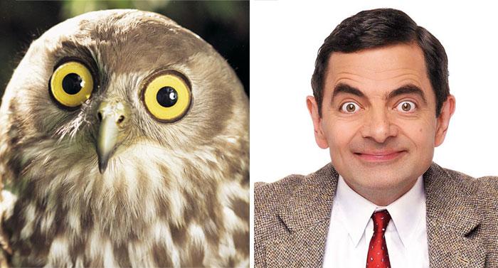Búho con la cara parecida a la del actor Rowan Atkinson