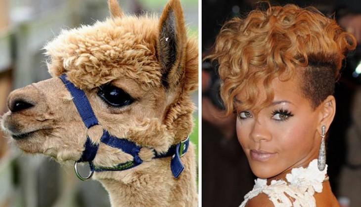 Alpaca con el look parecido al de Rihana
