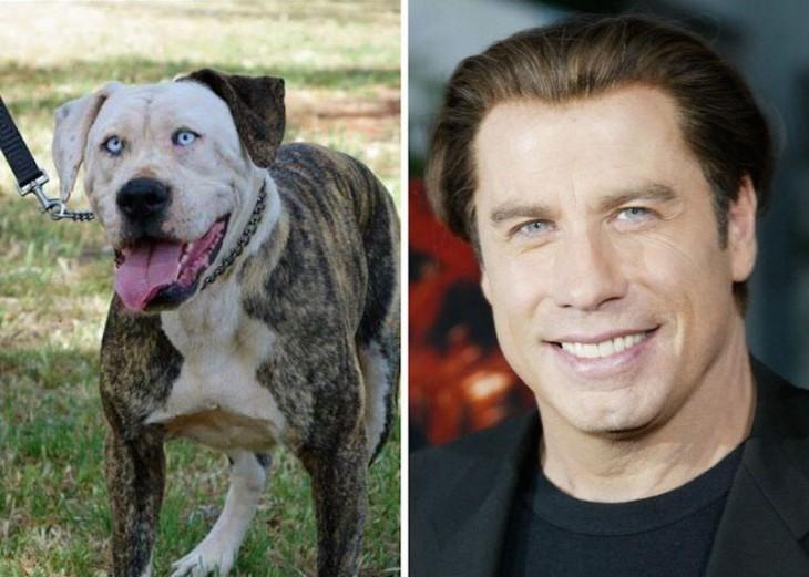 John travolta comparado con un perro