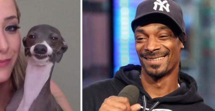 cara de un perro comparada con la del rapero Snoop Dogg