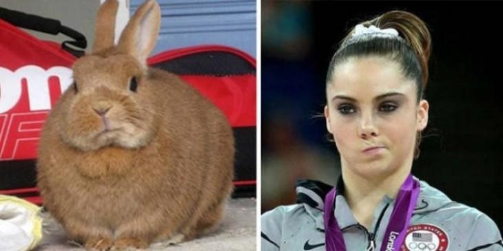 Conejo con la cara parecida a Mckayla Maroney