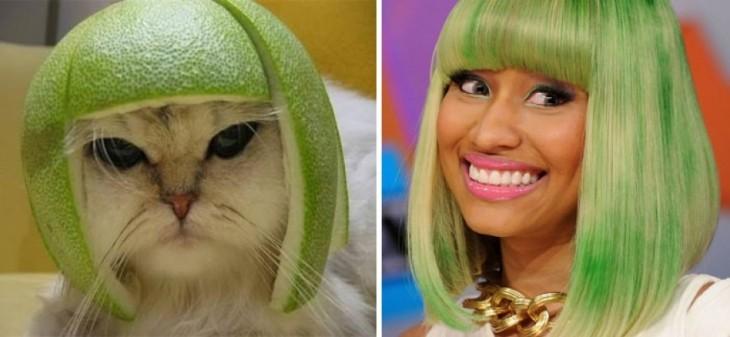 gato con una peluca verde muy parecido al look de Nicky Minaj