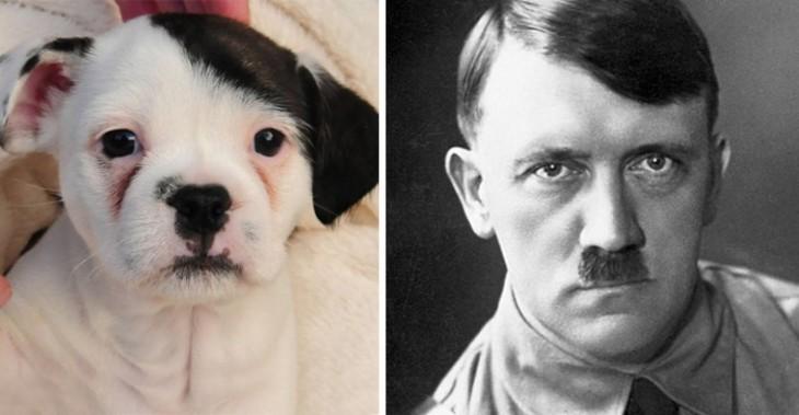 perrito con un look muy parecido al de Adolf Hitler