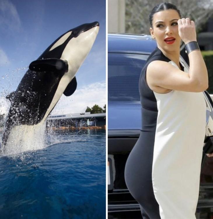 imagen que compara una ballena con Kim Kardashian
