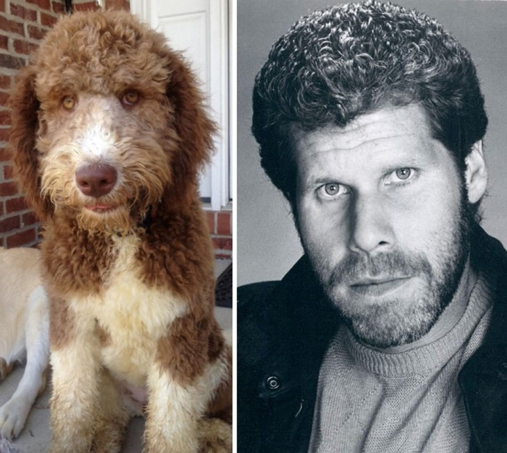 Este perro se parece a Ron Perlman