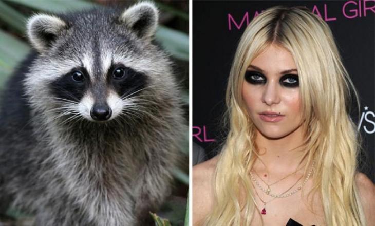Taylor Momsen muy parecida a este mapache