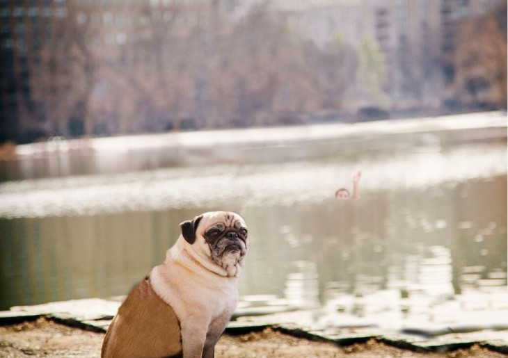Batalla de photoshop a este hombre y su perro pug donde el chico parece estarse ahogando