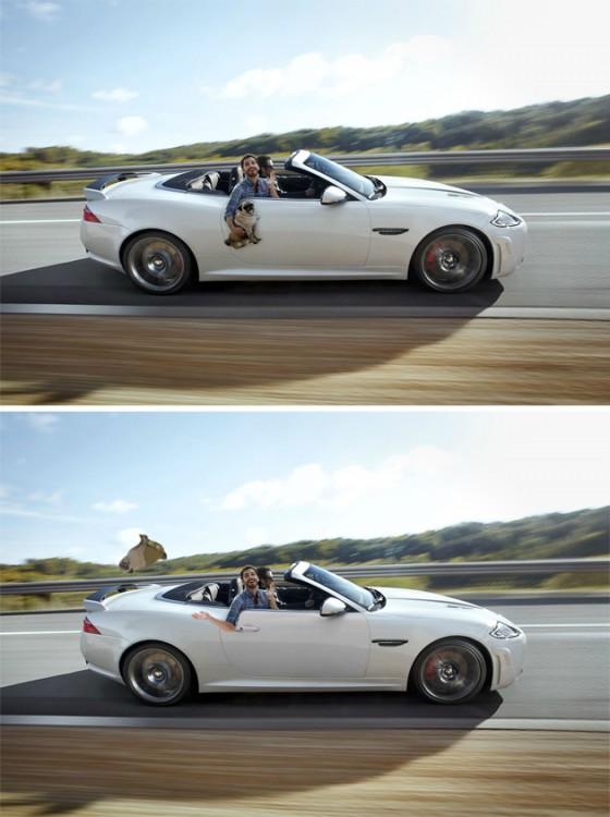Batalla de photoshop a este hombre y su perro pug donde van en un carro y el chico avienta al pug